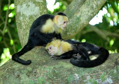 Costa Rica - Monkeys